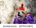 Cute Dog Wearing A Red Hat...