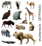 set of african animals.... | Shutterstock . vector #187945631