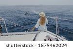 The Bottlenose Dolphins Swim...