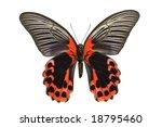 Giant Birdwing Butterfly From...