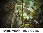 Small photo of Lizards are a widespread group of squamate reptiles.Lizards and snakes share a movable quadrate bone.Many lizards can detach their tails to escape from predators, an act called autotomy.