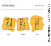 hair thickness types set. fine  ...   Shutterstock .eps vector #1879728274