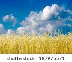 golden wheat field with blue...   Shutterstock . vector #187975571