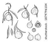 australian fruits. hand drawn...   Shutterstock .eps vector #1879796104