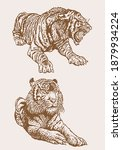 graphical vintage set of tigers ... | Shutterstock .eps vector #1879934224