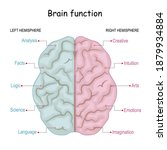 Brain Function. Left Analytical ...
