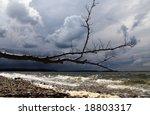 Fallen Tree On A Dark Beach ...