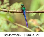 a beautiful colorful ... | Shutterstock . vector #188035121