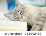 Blue Eyed Domestic Cat Lying O...