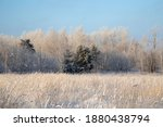 winter landscape with trees...   Shutterstock . vector #1880438794