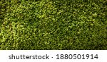 Stone Background With Moss And...