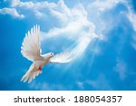 Dove in the air with wings wide ...