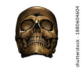 Vintage Skull Front View Yellow ...