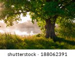 oak tree in full leaf in summer ... | Shutterstock . vector #188062391