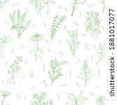 medicinal herbs seamless...   Shutterstock .eps vector #1881017077