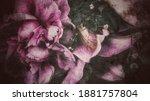 Beautiful Dark Themed Flower...