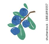 hand drawn branch of ripe...   Shutterstock .eps vector #1881893557