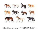 Collection Of Horses And Pony...