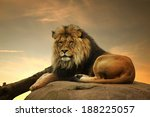 Stock photo african lion 188225057