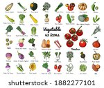 Vector Colored Food Icons...