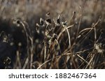 Grassy Field Grass And Brush...