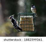 Woodpecker And Chickadee...