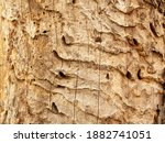 Destroyed Tree Bark By Bark...