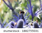 Bees Pollinating Flowers On The ...