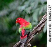 beautiful red parrot ... | Shutterstock . vector #188283287