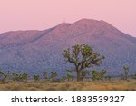 Desert Landscape Including...