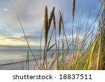 Grass In Sand Dunes In Front O...