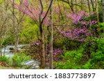 Spring Along Birch River ...