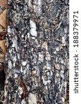 bark texture background | Shutterstock . vector #188379971