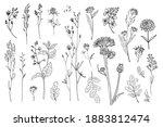 flowers vector line drawing.... | Shutterstock .eps vector #1883812474