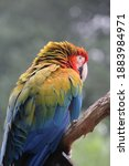Parrots  Also Known As...