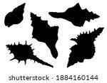 Hand Drawn Vector Set Of Shells ...