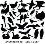 birds silhouette vector   Shutterstock .eps vector #18843154