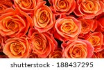 A Bunch Of Orange Roses