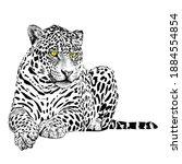 animal illustration  sitting...   Shutterstock .eps vector #1884554854
