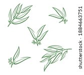 eucalyptus set. collection icon ... | Shutterstock .eps vector #1884663751