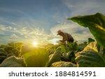 Agriculturist utilize the core...