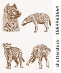 graphical vintage set of hyena  ... | Shutterstock .eps vector #1884963664