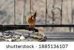 A Female Cardinal Sitting On An ...