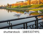 White Birds Perched On The...