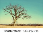 A Isolated  Lone Old Oak Tree...