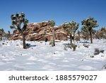 Winter Landscape In Joshua Tree ...