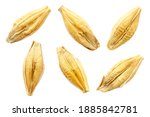 Barley seeds are isolated on...