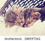 Stock photo striped kittens sleeping 188597261
