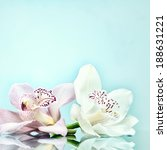beautiful romantic orchid... | Shutterstock . vector #188631221
