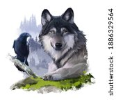 Grey Wolf And Black Raven On...